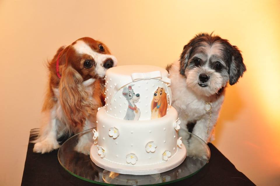 pet-wedding-luxury57